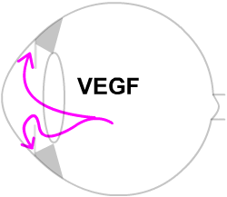 retinal ischaemia releases VEGF, a growth chemical