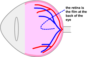 the side view of the retina showing the retina